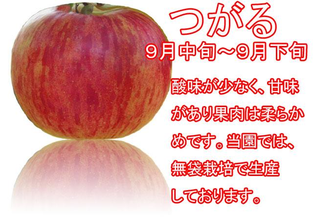 りんごの品種,つがる。酸味が少なく、甘味があり果肉は柔らかめです。当園では無袋で栽培しております。
