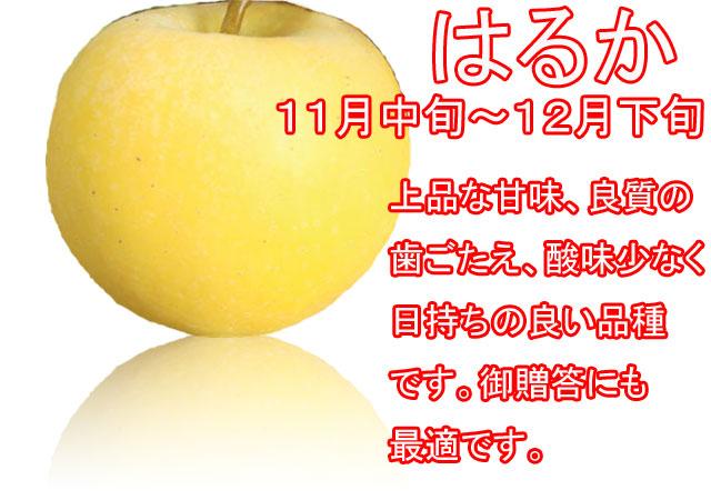 りんごの品種,はるか。上品な甘味、良質な歯ごたえ、酸味が少なく日持ちの良い品種です。御贈答にも最適です。