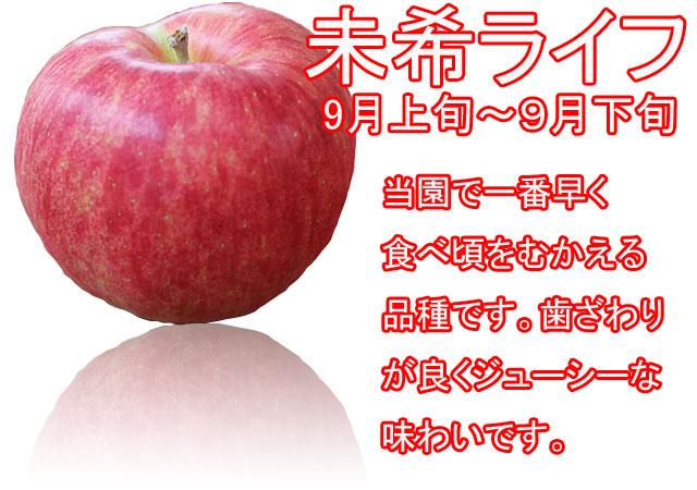 りんごの品種,未希ライフ。当園で一番早く食べれる品種です。歯ざわりが良くジューシーな味わいです。